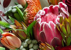 Two different varieties of protea, blue a tulip, coexit in a warm, summery bouquet