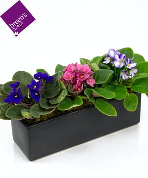 Violet Noir