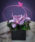Pink Orchid Noir