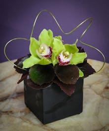Green Orchid Noir