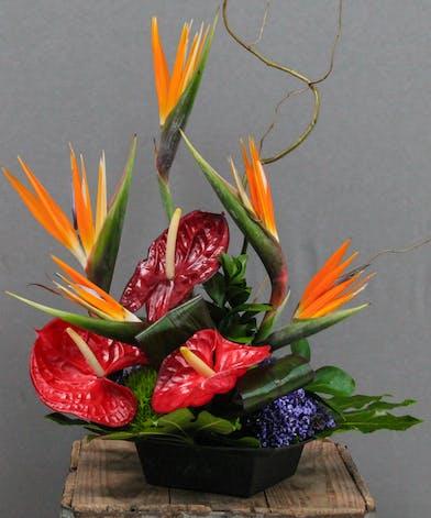 Birds In Flight   Houston Florist :: Breen's