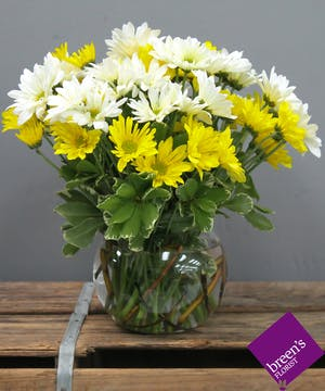 Rain or Shine Daisies :: Breen's Florist Houston Texas