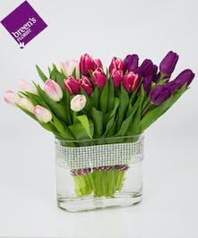 Tulip Trilogy