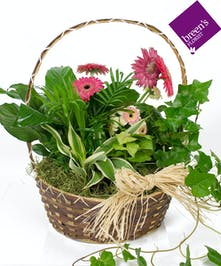 Bloomin' In Houston : Plants Same Day Delivery Florist
