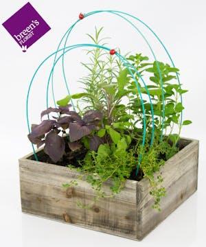 Love Grows Herb Garden