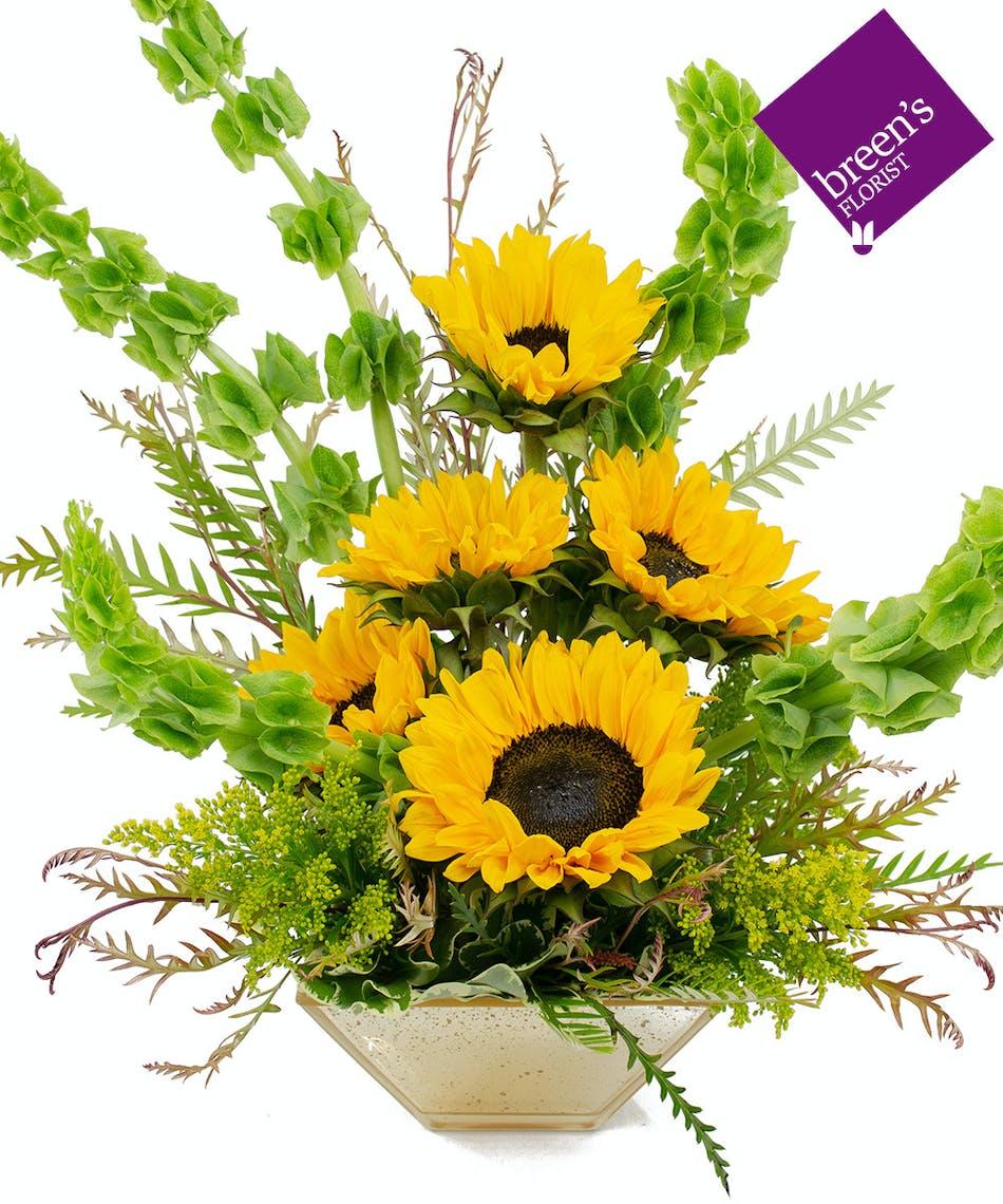Sunray Haze Sunflowers In Houston Texas Flowers