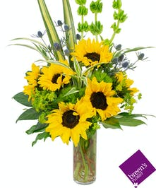 Order a Tall Sunflower Arrangement in HoustonTexas