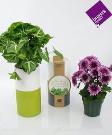 The DIY Plant Boss