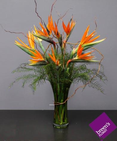 Makaha (Birds Of Paradise) :: Breen's Florist Houston TX