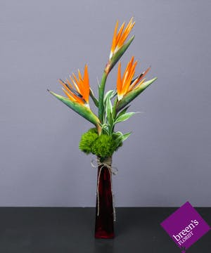 Kualoa (Birds Of Paradise) :: Florist Houston TX 77055