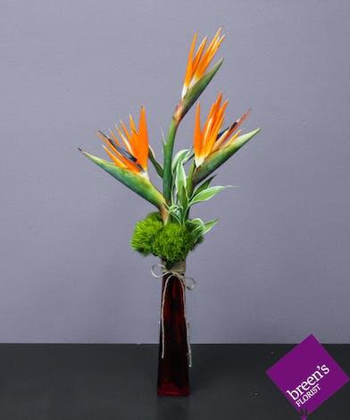Kualoa (Birds Of Paradise) :: Florist Houston TX 77055