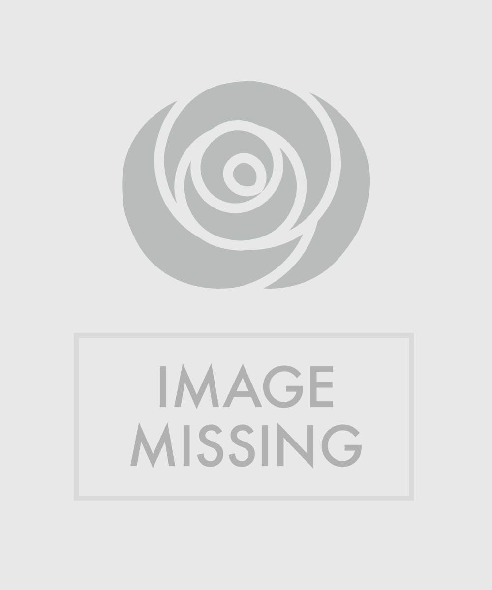Double Bromeliad Plant