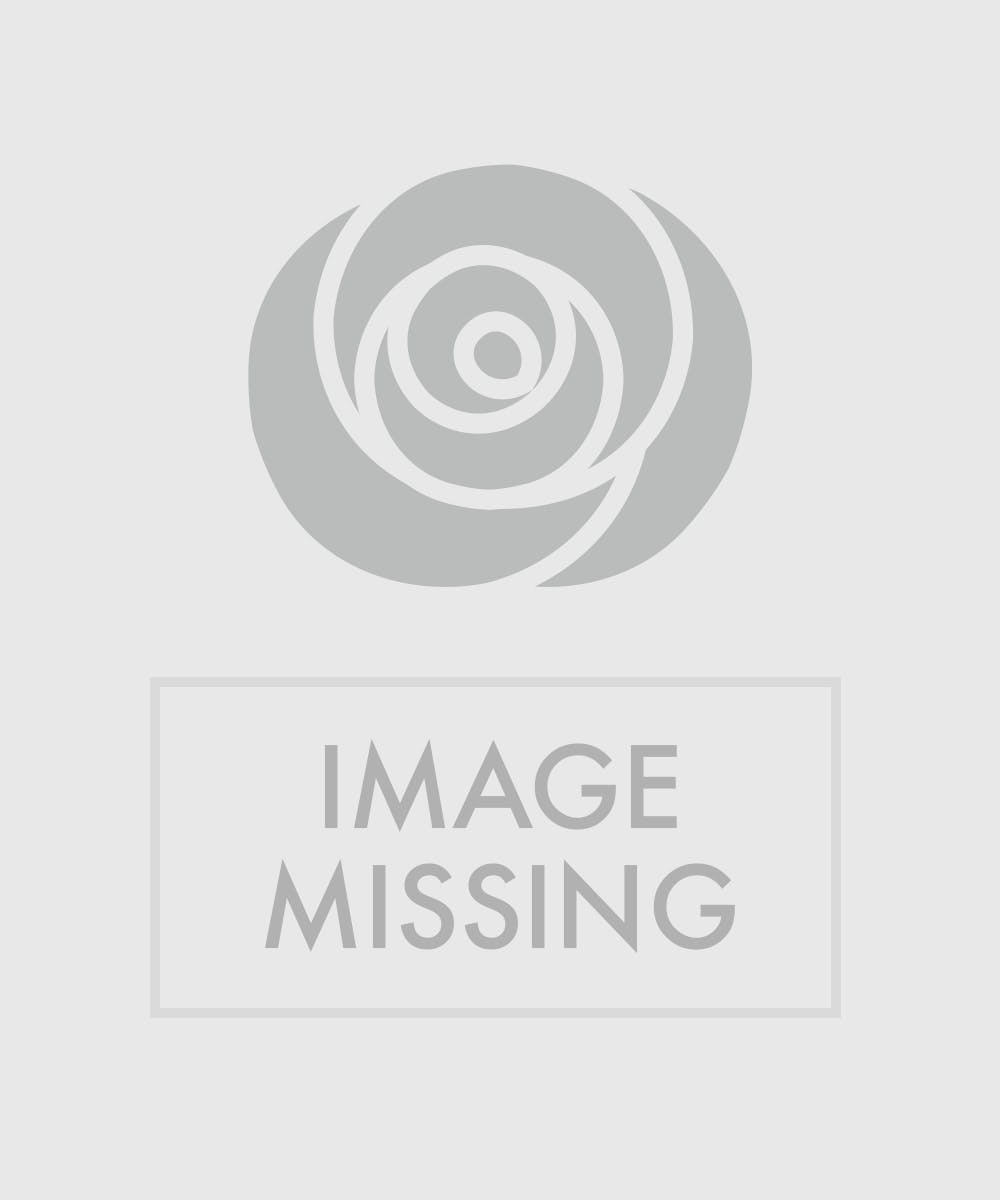 Desktop Poinsettia